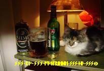 Kitty an der Muresch von ARAD